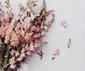 flowers, aesthetic, and pink image