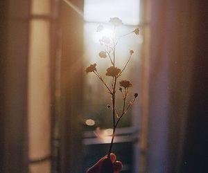 flowers, sun, and light image