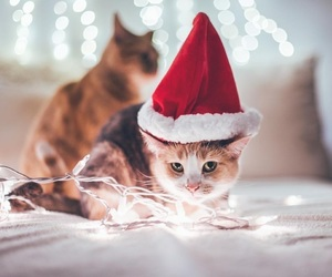 cat, lights, and christmas image