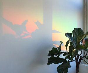 rainbow, aesthetic, and plants image