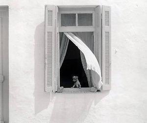 dog, white, and window image