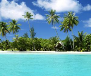 beaches, coastline, and palm trees image