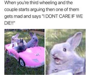 funny, meme, and bunny image