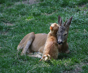 cat, deer, and cute image