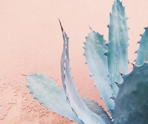 cactus, wallpaper, and aesthetic image