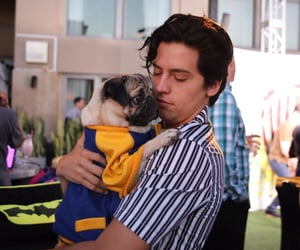 cole sprouse, boy, and dog image