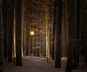 brown, winter, and forest image