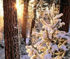 forest, woods, and winter sun image