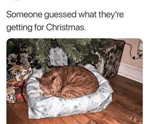 cat, meme, and present image