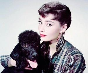 audrey hepburn, vintage, and dog image