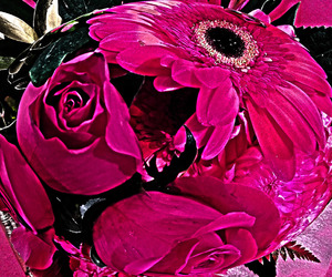 flowers, pink, and fuscia image