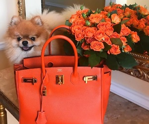 bag, flowers, and dog image