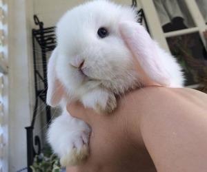 animals, bunny, and rabbit image