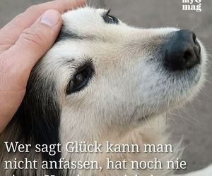 sprüche hunde 45 images about Hunde Sprüche ♡ on We Heart It | See more about  sprüche hunde