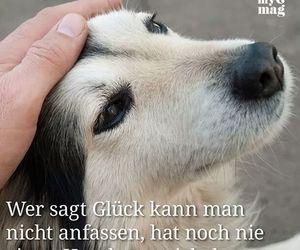 sprüche für hunde 45 images about Hunde Sprüche ♡ on We Heart It | See more about  sprüche für hunde
