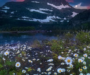 flowers, nature, and daisies image