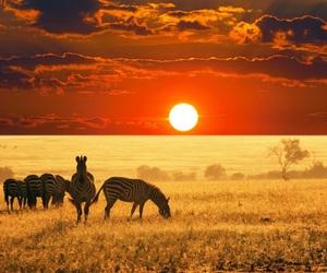 zebra, animal, and africa image
