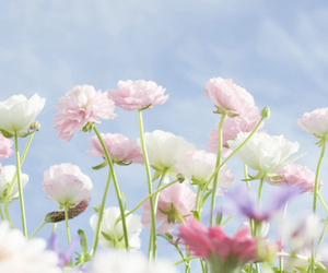 floral, pretty, and flowers image