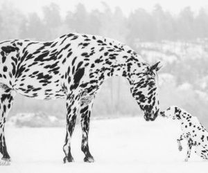 horse, dog, and snow image