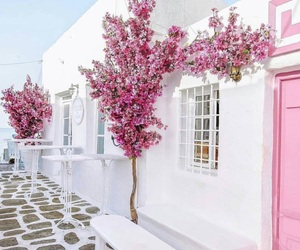 pink, flowers, and white image