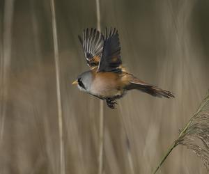 amazing, beak, and feathers image
