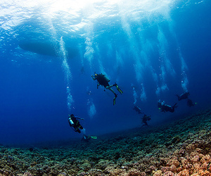 diving, ocean, and underwater image
