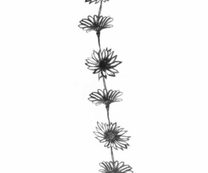 flowers, black and white, and wallpapers image