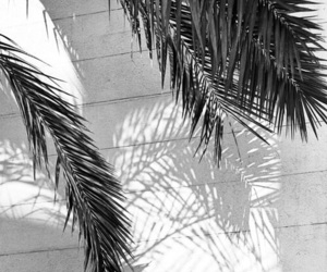 summer, palms, and pink image