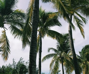 background, caribe, and coco image