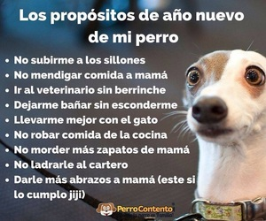 dogs, frases, and perro image