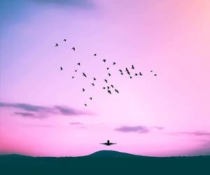 birds, explore, and sunset image