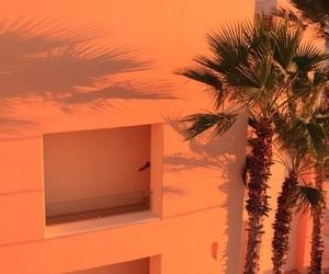 orange, tropic, and palm image