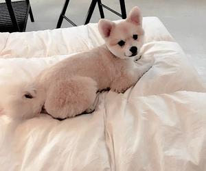 soft. and dog image