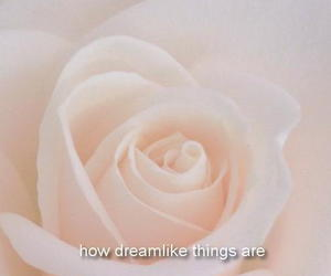dreamlike, quote, and rose image