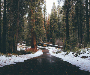 escape, winter, and forest image