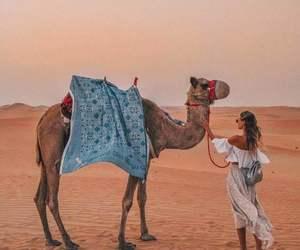 desert, camel, and Dubai image
