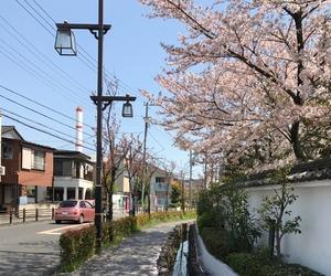flowers, korea, and japan image