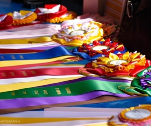 awards, competition, and childhood image