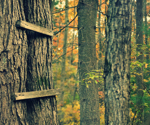 childhood, trees, and climbing trees image