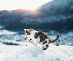 animal, animals, and snow image