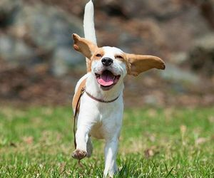 dog, happiness, and happy image