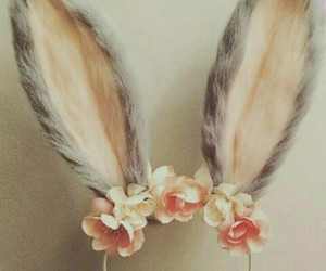 ears, rabbit, and flowers image