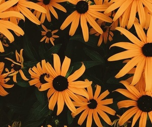 flowers, wallpaper, and yellow image