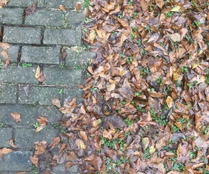 cold, leaves, and sidewalk image