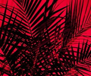 red, aesthetic, and plants image