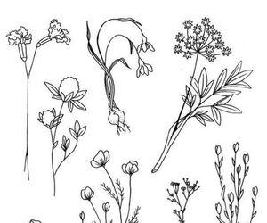 draw, drawing, and tatoos image