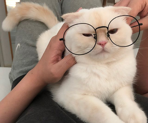 cats, glasses, and kitten image