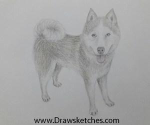 drawings, husky dog, and pencil drawing image