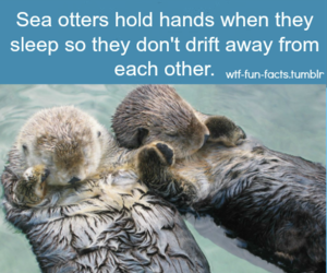 animal, otters, and cute image