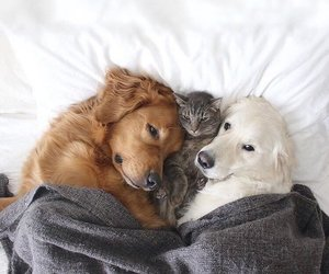 cute animals, cuteness overload, and best pals image
